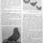 Peterfi Stefan - Cresterea porumbeilor (251)