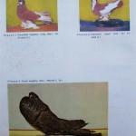 Peterfi Stefan - Cresterea porumbeilor (275)
