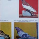 Peterfi Stefan - Cresterea porumbeilor (284)
