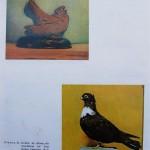 Peterfi Stefan - Cresterea porumbeilor (285)