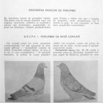 Peterfi Stefan - Cresterea porumbeilor (51)