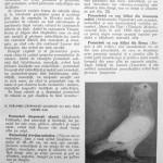 Peterfi Stefan - Cresterea porumbeilor (53)