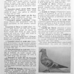 Peterfi Stefan - Cresterea porumbeilor (54)