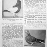 Peterfi Stefan - Cresterea porumbeilor (56)