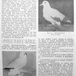 Peterfi Stefan - Cresterea porumbeilor (58)
