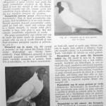 Peterfi Stefan - Cresterea porumbeilor (59)