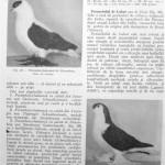 Peterfi Stefan - Cresterea porumbeilor (62)