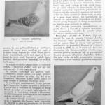Peterfi Stefan - Cresterea porumbeilor (64)