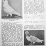Peterfi Stefan - Cresterea porumbeilor (65)