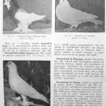 Peterfi Stefan - Cresterea porumbeilor (72)