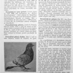 Peterfi Stefan - Cresterea porumbeilor (76)