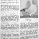Peterfi Stefan - Cresterea porumbeilor (77)