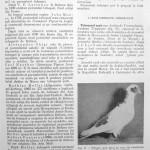 Peterfi Stefan - Cresterea porumbeilor (85)