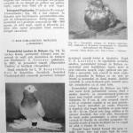 Peterfi Stefan - Cresterea porumbeilor (87)
