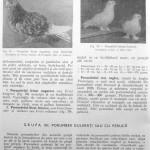 Peterfi Stefan - Cresterea porumbeilor (90)