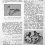 Peterfi Stefan - Cresterea porumbeilor (9)
