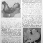 Peterfi Stefan - Cresterea porumbeilor (94)