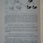 Rasele de porumbei din Romania - Feliciu Bonatiu (114)