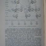 Rasele de porumbei din Romania - Feliciu Bonatiu (116)