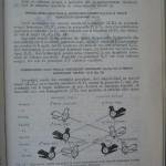 Rasele de porumbei din Romania - Feliciu Bonatiu (121)