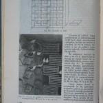 Rasele de porumbei din Romania - Feliciu Bonatiu (150)