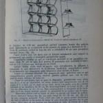 Rasele de porumbei din Romania - Feliciu Bonatiu (151)