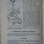 Rasele de porumbei din Romania - Feliciu Bonatiu (154)