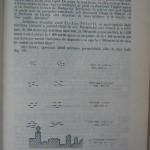 Rasele de porumbei din Romania - Feliciu Bonatiu (177)