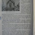 Rasele de porumbei din Romania - Feliciu Bonatiu (19)