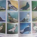 Rasele de porumbei din Romania - Feliciu Bonatiu (235)
