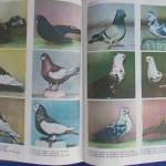 Rasele de porumbei din Romania - Feliciu Bonatiu (237)