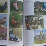 Rasele de porumbei din Romania - Feliciu Bonatiu (238)