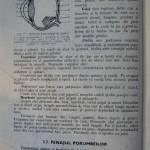 Rasele de porumbei din Romania - Feliciu Bonatiu (29)