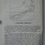 Rasele de porumbei din Romania - Feliciu Bonatiu (3)