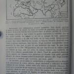 Rasele de porumbei din Romania - Feliciu Bonatiu (7)