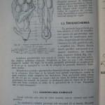 Rasele de porumbei din Romania - Feliciu Bonatiu (96)