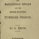The flying Tippler & Tumbler pigeon by G. Smith0005