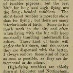 The flying Tippler & Tumbler pigeon by G. Smith0009