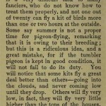 The flying Tippler & Tumbler pigeon by G. Smith0030