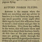 The flying Tippler & Tumbler pigeon by G. Smith0037