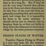 The flying Tippler & Tumbler pigeon by G. Smith0042