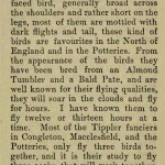 The flying Tippler & Tumbler pigeon by G. Smith0051
