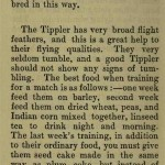 The flying Tippler & Tumbler pigeon by G. Smith0054