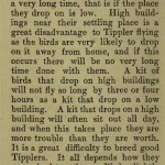 The flying Tippler & Tumbler pigeon by G. Smith0056