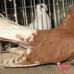 Vultur de Bialystok (1)