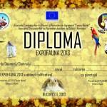 diploma-1024x723