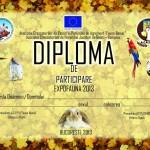 diploma-de-participare-1024x723