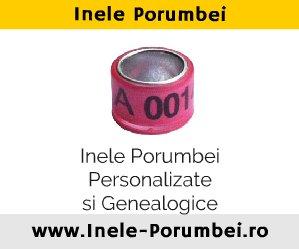 Banner Inele-Porumbeiro